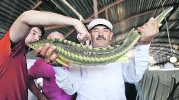 Мужчина держит в руках рыбу осетровых пород