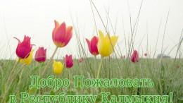 tulips2815