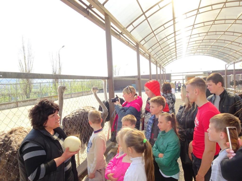 На страусином подворье