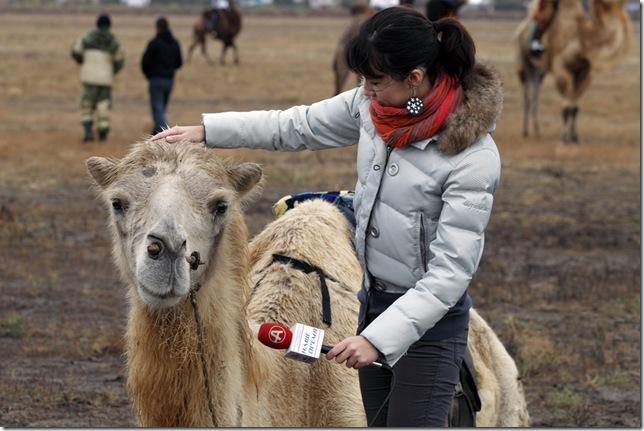 Аст. интервью у верблюда