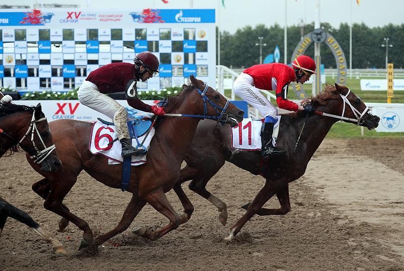 Скачки Москва. лучшие лошади